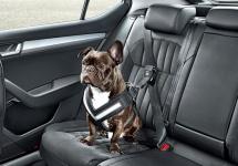 Skoda lansează accesorii speciale pentru câini, care îi ţin în siguranţă în automobil