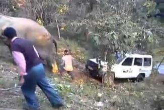Cea mai nouă modă la tractarea auto: tractarea cu elefantul din noroi! (Video)