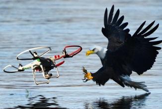 Poliţia olandeză dresează vulturi pentru a prinde drone