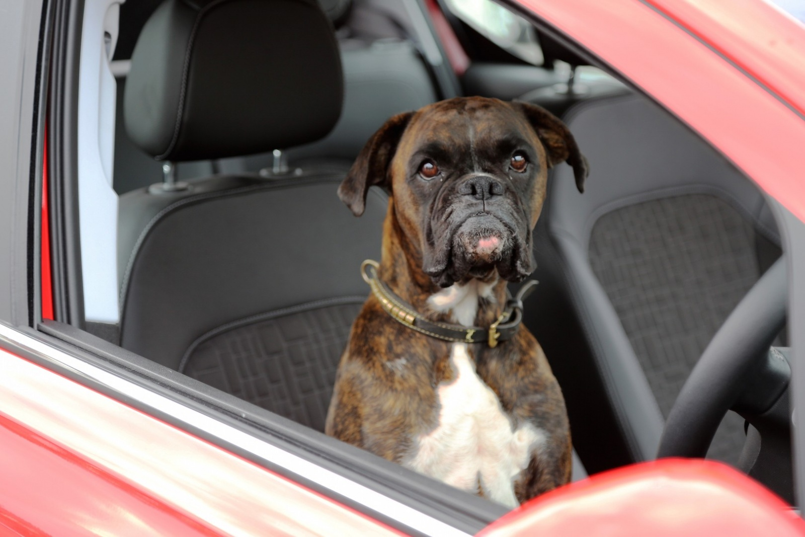 vauxhall-asks-why-parallel-park-when-you-can-parallel-bark_1