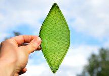 """Iată cum o """"frunză"""" artificială va putea crea combustibil ; O inovaţie marca Harvard"""