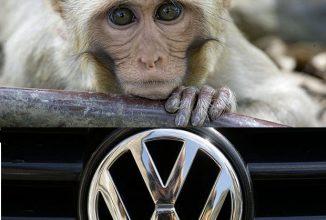 Scandal monstru la Volkswagen: au testat emisiile de noxe pe maimuţe, un partener propusese teste umane!